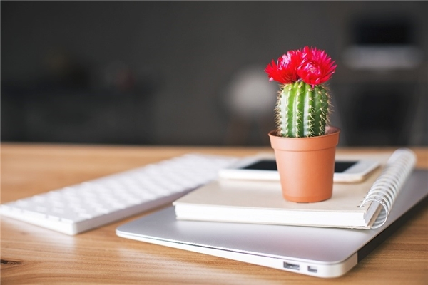 Đặt cây xương rồng trên bàn làm việc, bạn có thể chọn chậu cây nhỏ một chút để dễ dàng thiết kế chỗ để hơn