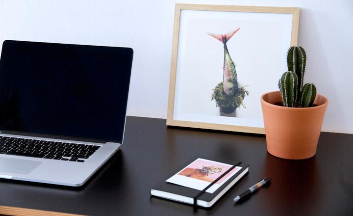 Có nhiều loại cây để bạn lựa chọn đặt cây xương rồng trên bàn làm việc, vô cùng bắt mắt và đáng yêu